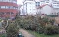 Forêt éphémère de sapins de Noël