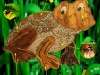 grenouille-19