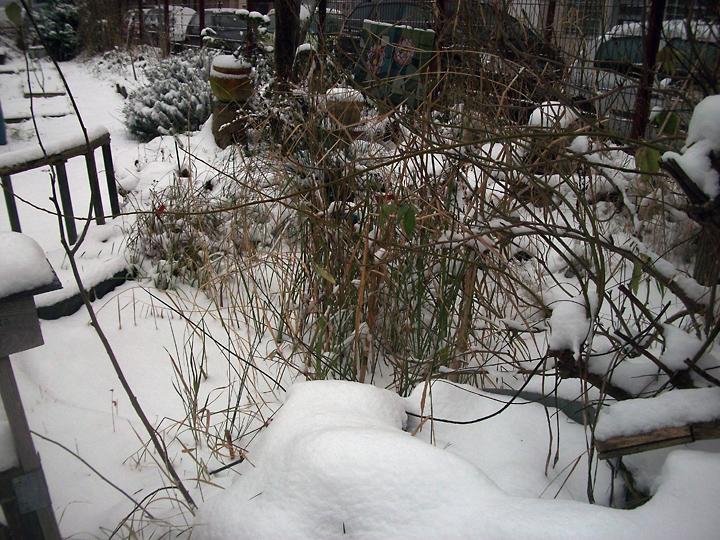 jardin-hiver-201318