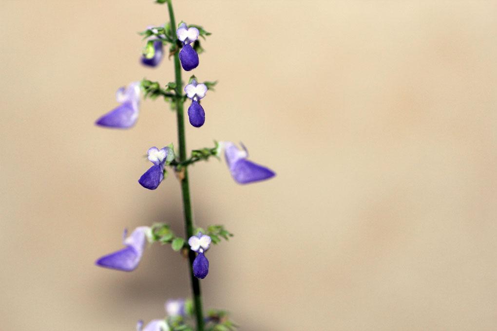 flore-30