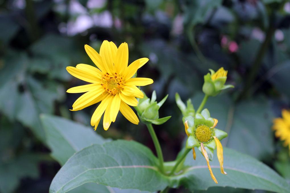 flore-48